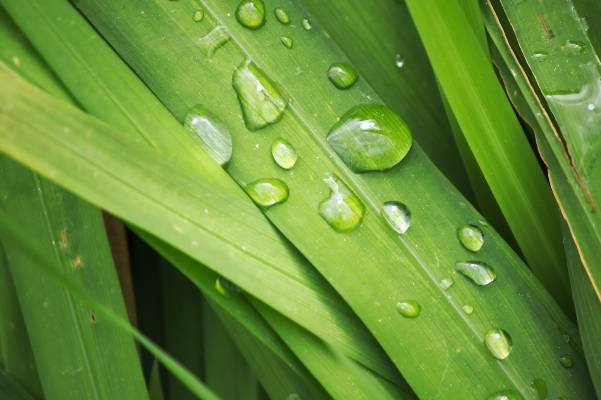 water droplet grass